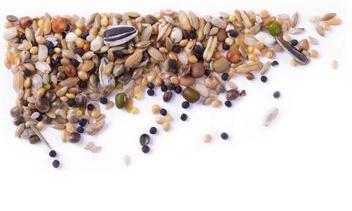 Mifuma Seeds 25 kg